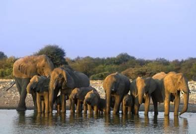 Namibia Elefantenherde