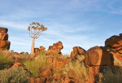 Namibia Köcherbäume