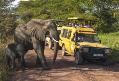 Tansania Elefanten und Jeep