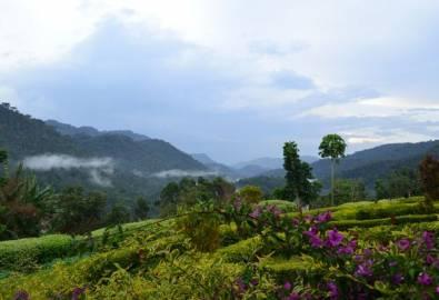 Uganda Bwindi Nationalpark