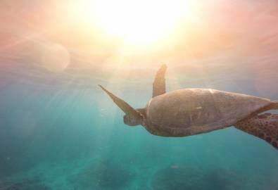 turtle_in_Ocean_3_StockSnap_ELADKTWHHU_2019-09.26